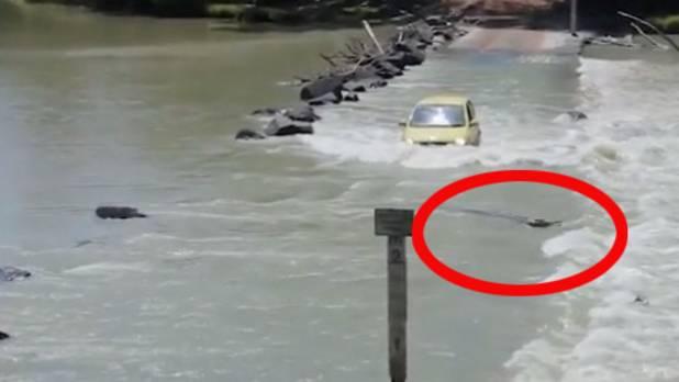 Gefährliche Kreuzung: Wenn ein Kleinwagen aufs Krokodil trifft
