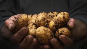 Kartoffeln sollte man waschen, nicht nur, weil sie aus konventionellem Anbau mit Pestiziden belastet sind, sondern auch, weil sie direkt aus der Erde gegraben werden und daher noch viel Dreck an ihnen klebt.