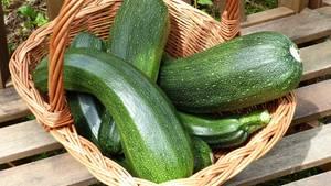 Giftige Zucchini