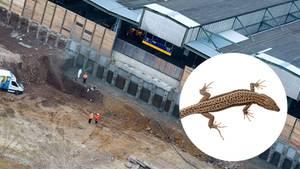 Stuttgart 21 vs. Artenschutz: Schotter für Millionen