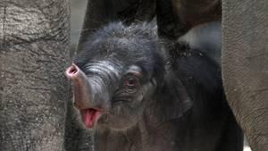 US-Amerikanerin vererbt Kölner Zoo 22 Millionen Dollar