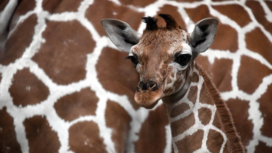 Kölner Zoo erbt 22 Millionen Dollar - dahinter steckt eine bewegende Geschichte