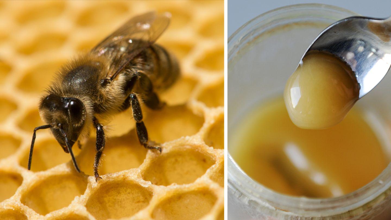 Gefahr für Honigsammler: Die Amerikanische Faulbrut wird durch Bakterien ausgelöst