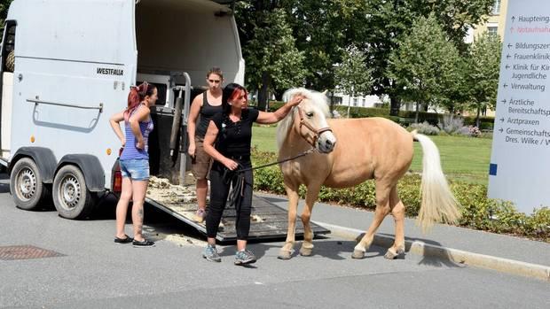 Pferd besucht todkranke Frau im Krankenhaus