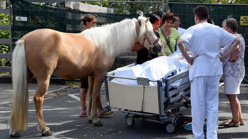 Abschied nehmen: Pflegepferd Dana am Bett der sterbenskranken Patientin