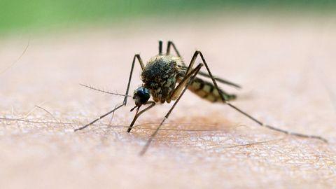 In Italien ist ein vierjähriges Mädchen an Malaria gestorben