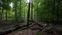 In einem Waldgebiet in Bayern wurde ein menschliches Skelett gefunden (Symbolbild)