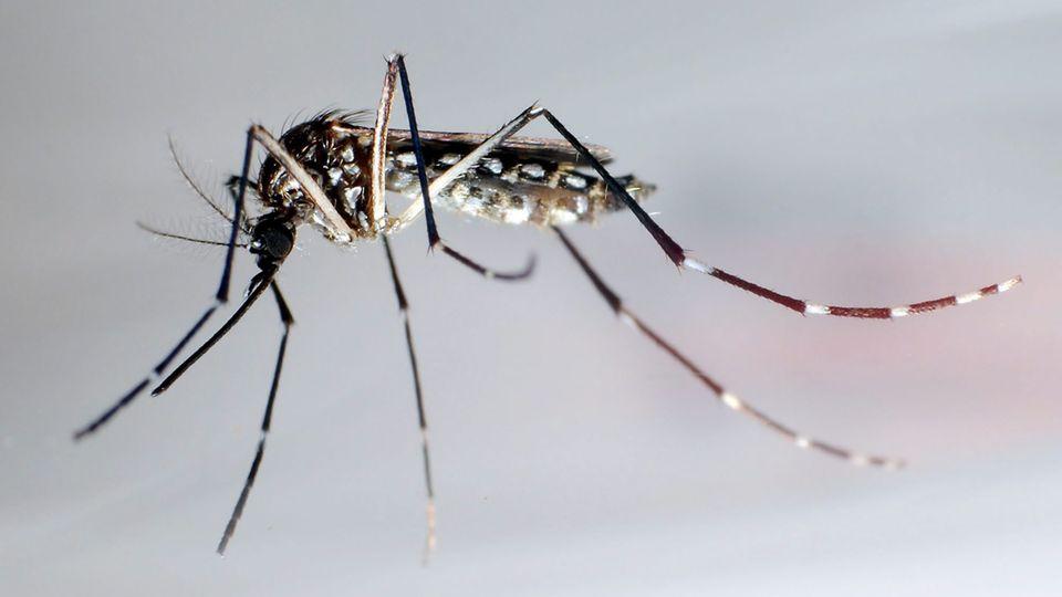 Stechmücken sind aktuell auf der Suche nach einem Winterquartier