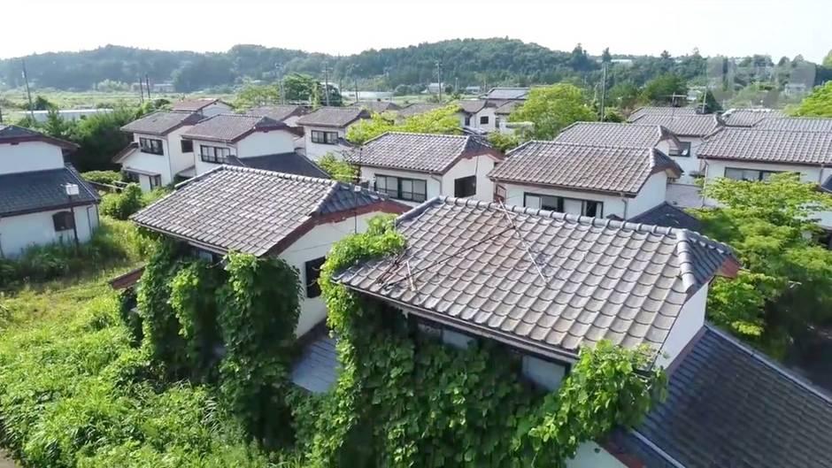 Sechs Jahre nach der Nuklearkatastrophe: Überwucherte Wohngebiete und Straßen - so sieht es heute in Fukushima aus