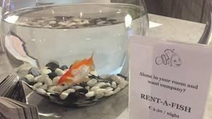 Goldfisch-Angebot im Charleroi Airport Hotel