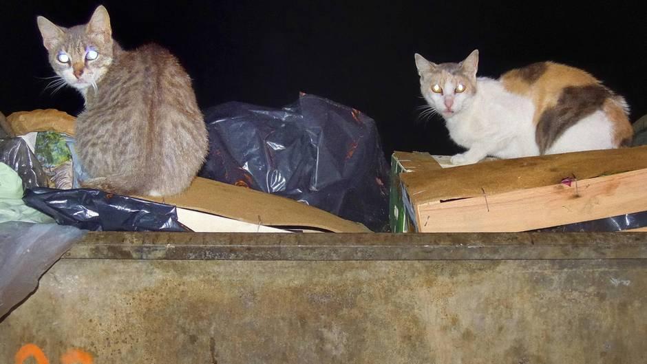 news 130 verwahrloste katzen in kleiner pariser wohnung entdeckt. Black Bedroom Furniture Sets. Home Design Ideas