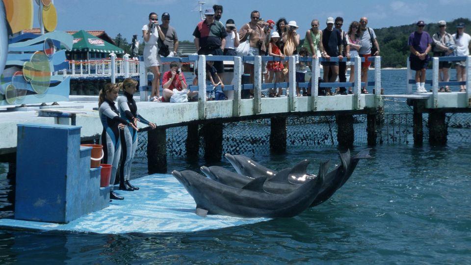 """Kubaner bringen Delfine per Hubschrauber vor """"Irma"""" in Sicherheit"""
