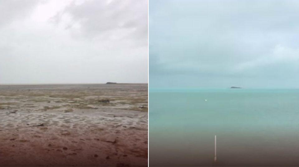 Hurrikan-Katastrophe: Seekühe stranden in Florida - Geschichte einer ungewöhnlichen Rettungsaktion