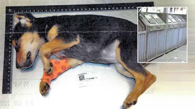 An einer Mülltonne fand ein Anwohner in Hamburg den schwer verletzten Hundewelpen - wenig später starb das Tier