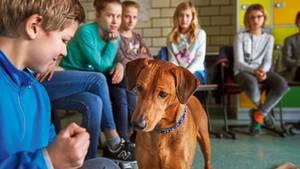 Hunde im Schulunterricht: Hunde im Schulunterricht