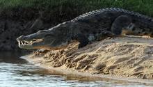Krokodil Sri Lanka