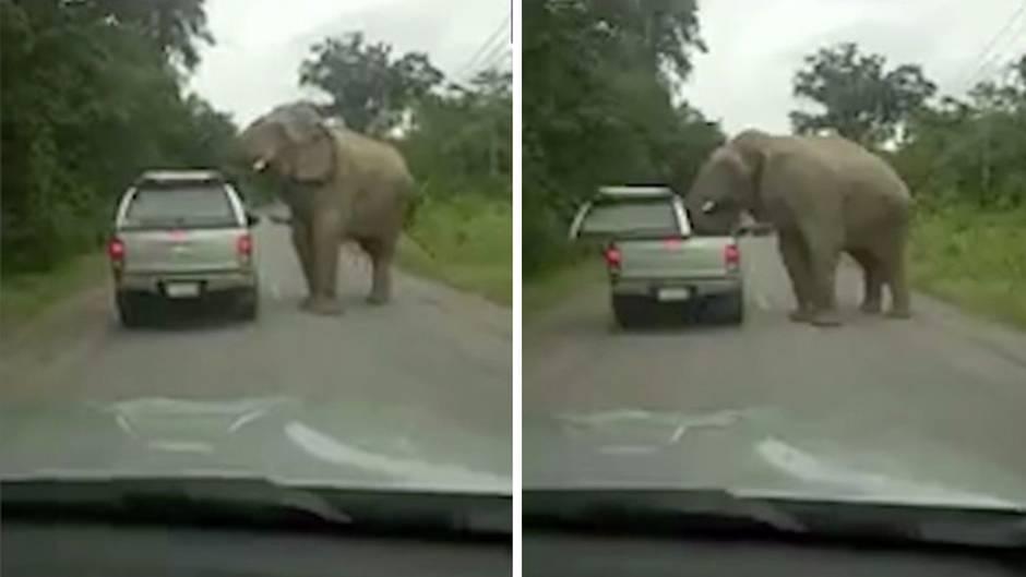 Elefant bei der Futtersuche