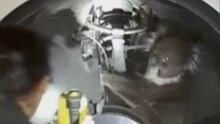 Ein Koala klammert sich ans Federbein eines Autos, während eine Frau den Kotflügel mit einer Taschenlampe ausleuchtet