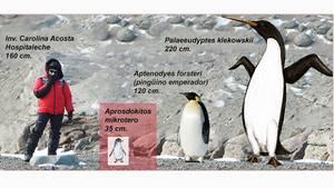 Kleinster Zwergpinguin der Welt entdeckt