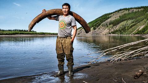 Jagd nach Elfenbein: Warum in Sibirien Kadaver und Skelette jahrtausendealter Mammuts liegen