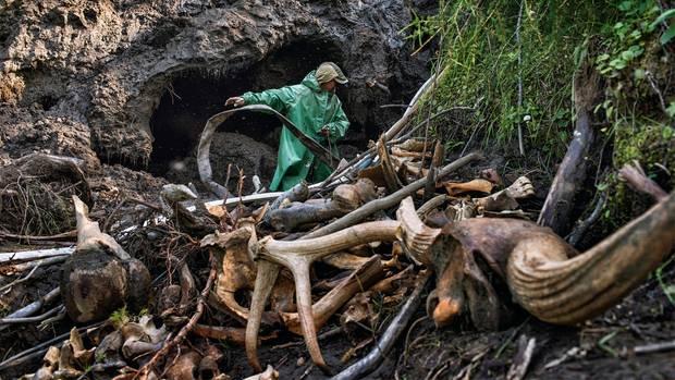 Nur die Stoßzähne der Mammuts interessieren die Männer. Andere Fundstücke landen auf großen Haufen neben den Höhlen