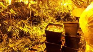 Horrorhaus von Höxter nun Heimat einer illegalen Drogen-Plantage