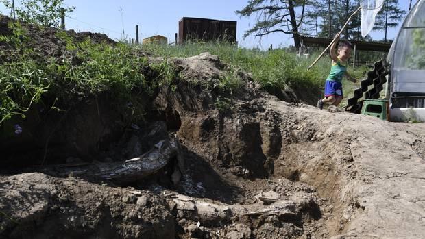 Mitten im Kartoffelacker stießen Hobbygärtner bei Jakutsk zufällig auf ein Mammutskelett. Sascha, 4, jagt lieber Schmetterlinge