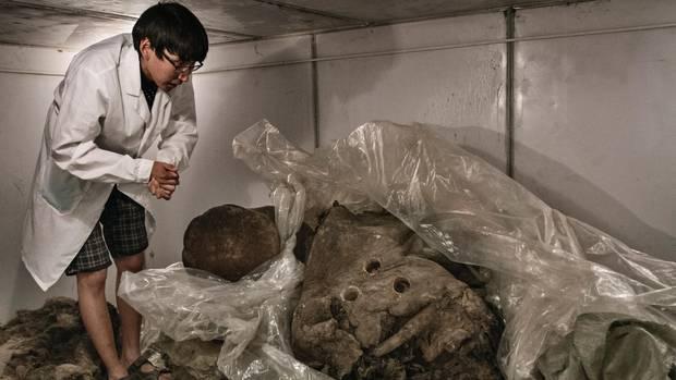 Die Kadaver in der Kühlkammer des Mammutmuseums in Jakutsk sehen wie alte Fleischberge aus. Robert Markow, wissenschaftlicher Mitarbeiter des Instituts, präsentiert die Sammlung. Sein Chef würde die Urzeitelefanten am liebsten klonen