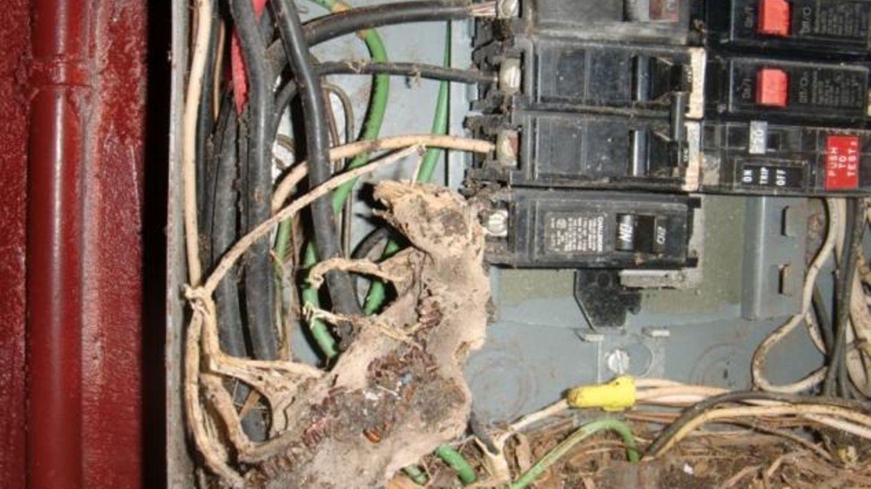 Darum sollte man alle Öffnungen einer Sicherungsanlage abdichten: Der kleine Kerl schaffte es in den Kasten, dort wurde er bis in die Schwanzspitze gegrillt. Purer Zufall, dass es nicht brannte.