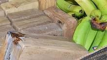 Bananenkisten mit Kokainpaketen (Archivbild)
