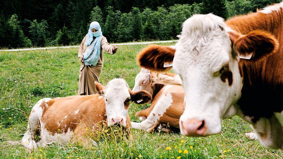 Exotische Vierbeiner: Melkunterricht ist bei Touristen aus dem Nahen Osten beliebt, diese Frau traut sich in freier Natur an die Kühe heran