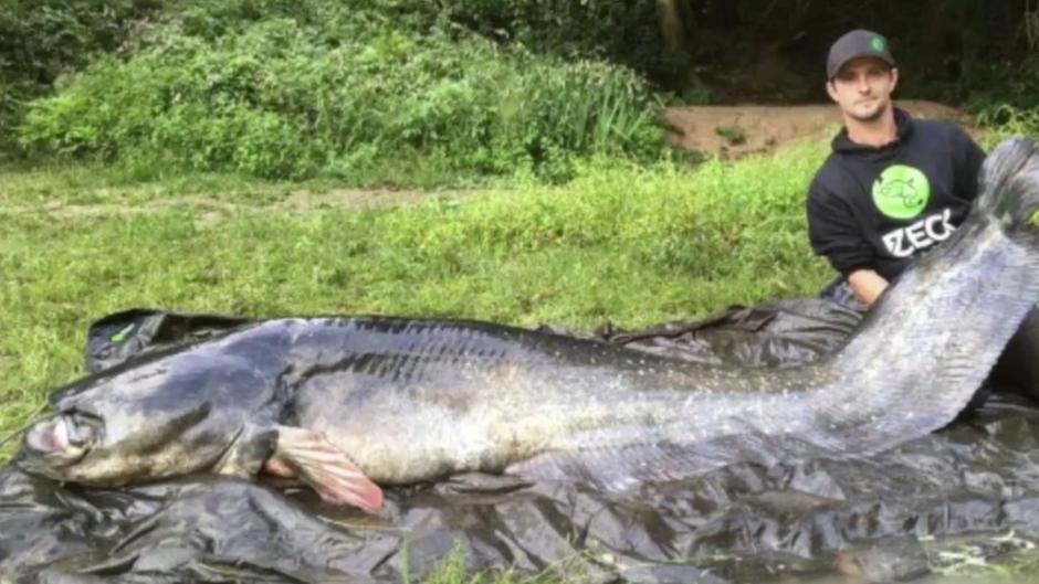 Riesenwels: Angler stellt mit riesigem Fang neuen Weltrekord auf