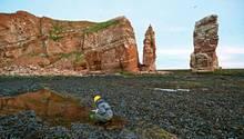 Vor Helgolands Wahrzeichen, der Langen Anna, untersucht eine Forscherin das Felswatt
