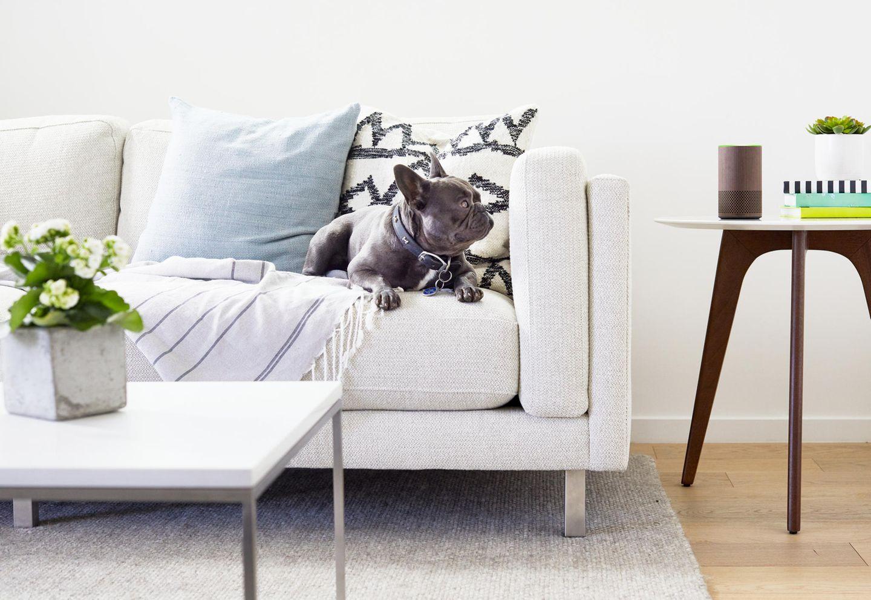 Der neue Amazon Echo steht auf einem Tisch neben einer Couch. dein Hund betrachtet ihn von dort