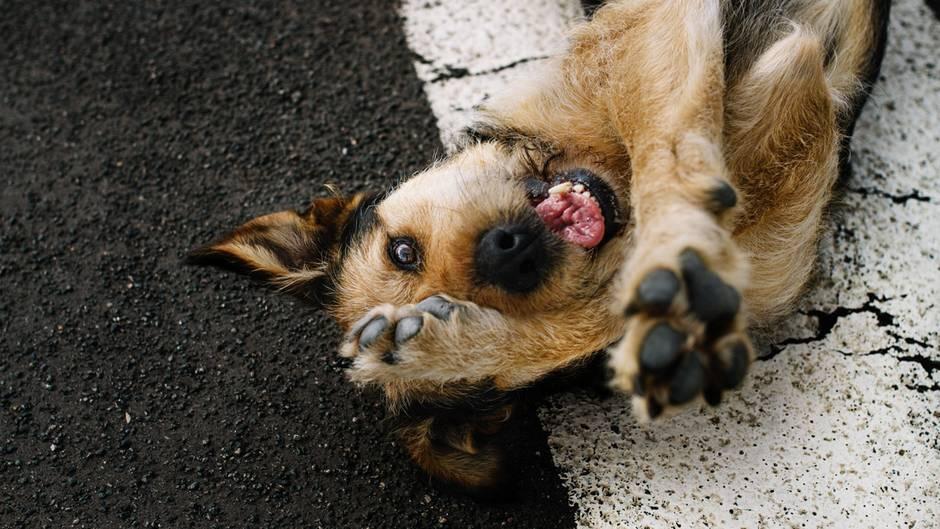 Mehr Fotos vonstadthunde-erfurtin derVIEW Fotocommunity    Aktionen und Informationen aus der VIEW Fotocommunity aufFacebookoderTwitter