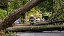 Umgestürzte Bäume sind in einer Straße in Hamburg zu sehen