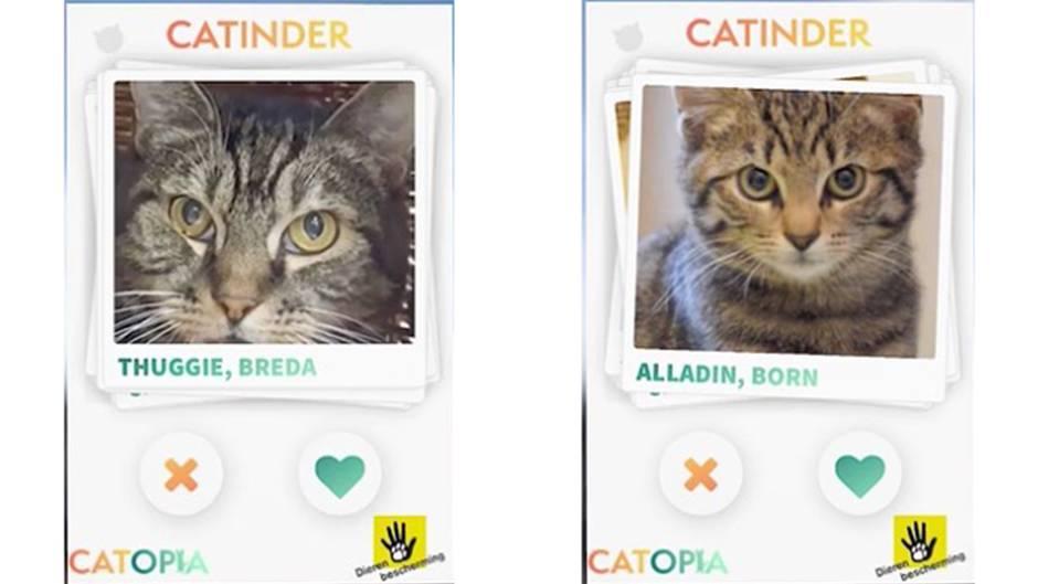 Catinder App