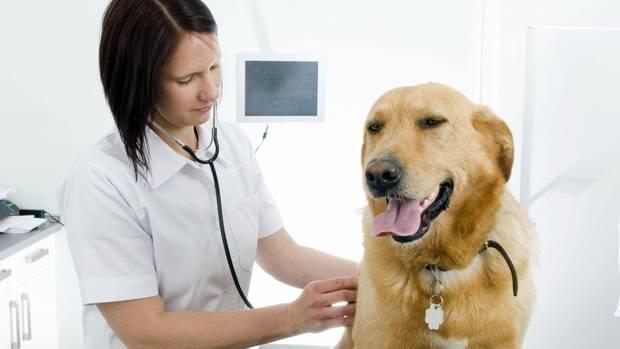 Italienerin erhält zwei bezahlte Urlaubstage für Pflege ihres kranken Hundes
