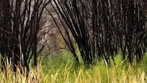 Verlaufen: Mutter und Sohn überleben zehn Tage in australischer Wildnis ohne Vorräte
