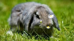 Klaute die Terrororganisation ALF der kleinen Kim die Kaninchen?