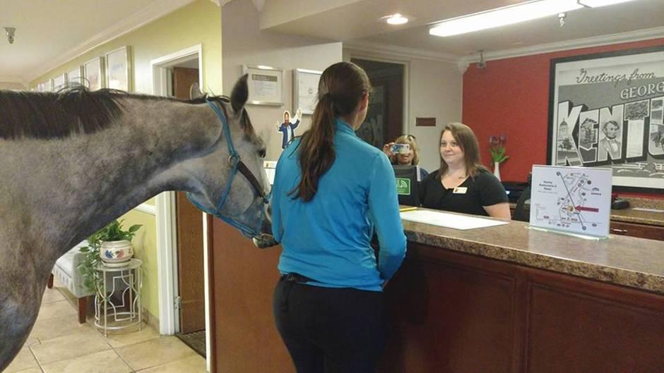 """Ungewöhnlicher Gast: Frau checkt mit ihrem Pferd in ein """"haustierfreundliches"""" Hotel ein"""