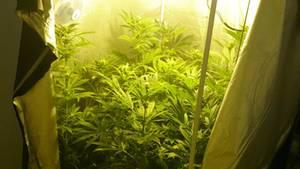 Nachrichten Deutschland Drogen