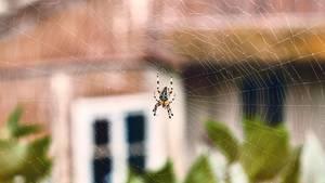 In den USA hat ein Mann eine Spinne mit einem Bunsenbrenner versucht zu töten.