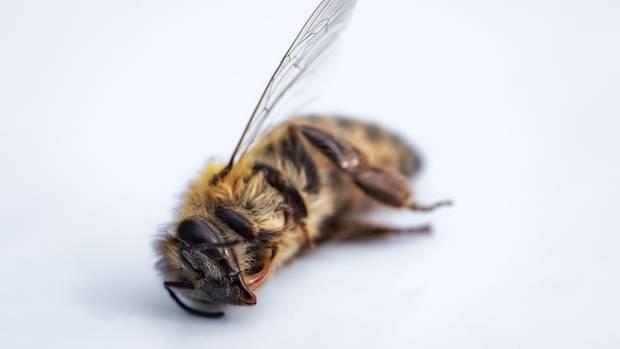 Insektensterben: mehr als 75 Prozent Schwund in weniger als 30 Jahren