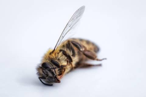 Dramatischer Schwund: Forscher schlagen Alarm: Gefährliches Insektensterben in Deutschland
