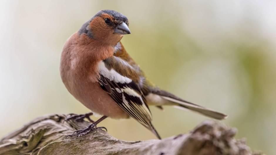 In Deutschland gibt es immer weniger Vögel