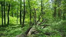 Gemeinsamer Ex nackt im Wald ausgesetzt