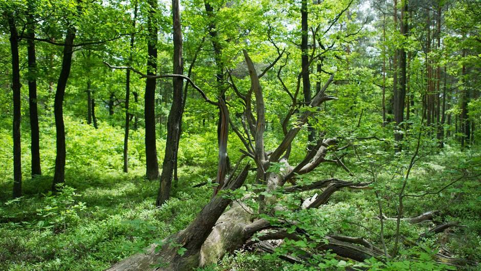 Frauen setzen früheren Partner nackt im Wald aus