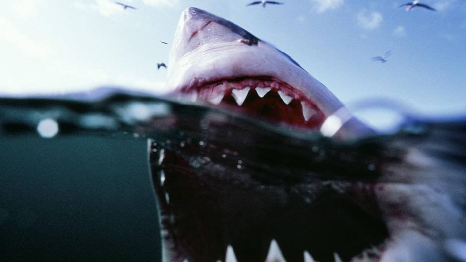 In Australien hat ein Vater seine Tochter vor einem Hai gerettet (Symboldbild)