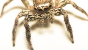 Nahaufnahme einer Spinne